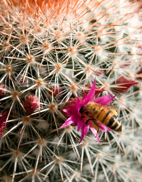 Sonoran Pollinator Photography Art | Josh Kimball Photography