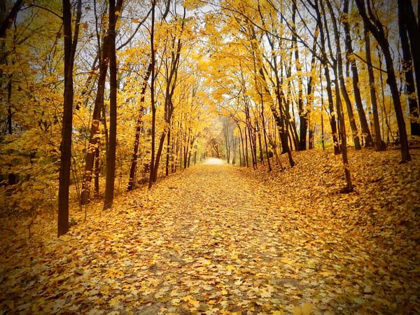 Golden Path Photography Art | CJ Harding