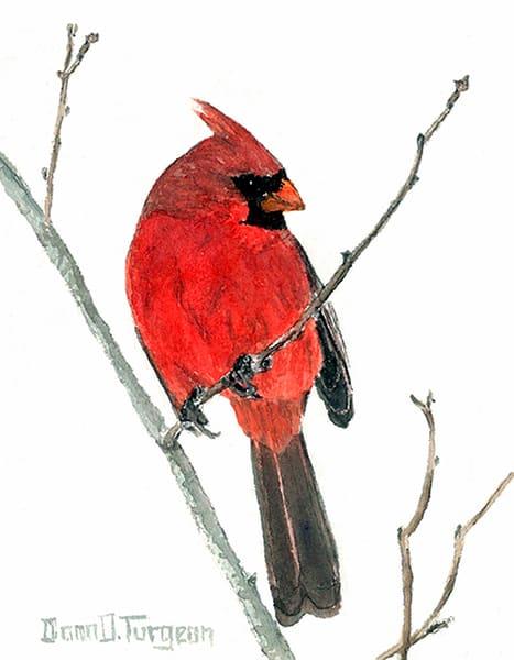 Northern Cardinal  Art | artalacarte
