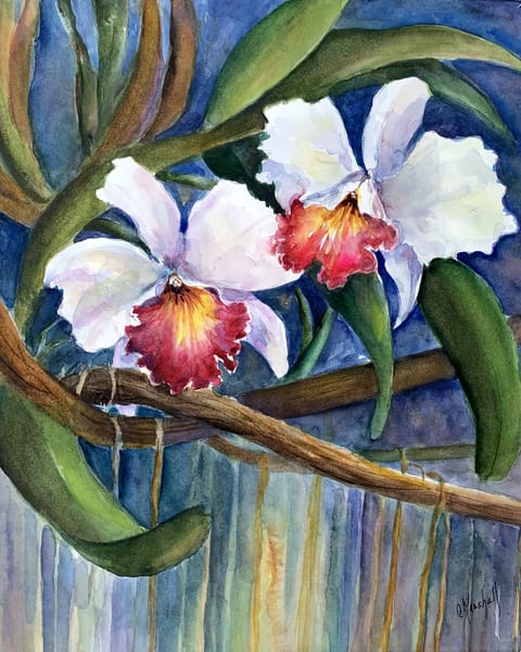 Cattleya Duo, Original Watercolor Painting