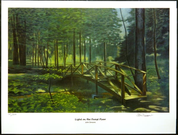 'light On The Forest Floor' Art | John Simonis Art Gallery