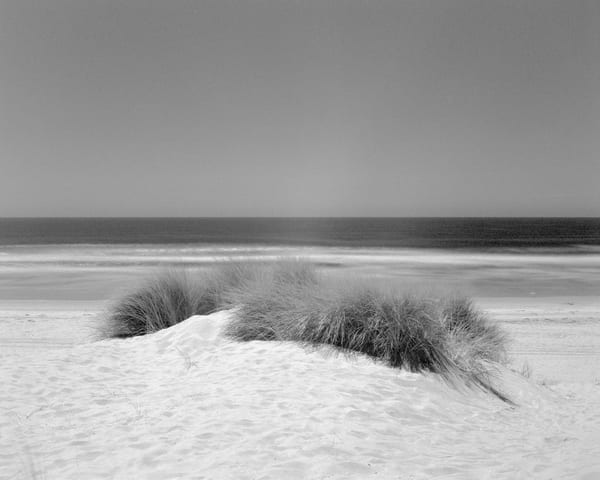Dune Grass   Oceano Photography Art | Julian Whatley Photography