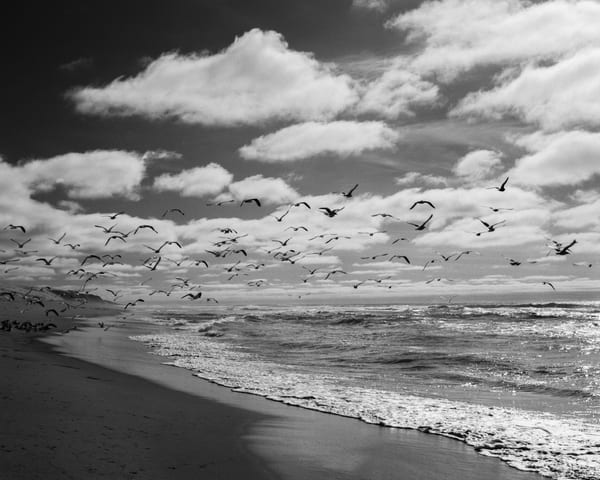 Seagulls   Guadalupe Dunes Photography Art | Julian Whatley Photography