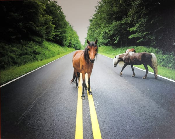 Wild Pony Gang - Photograph on Pearl Canvas