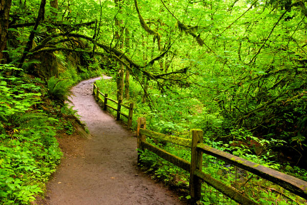 Wildwood Trail, Forest Park Art   Shaun McGrath Photography