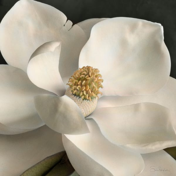 Magnolia No 8 Art | Sondra Wampler | fine art