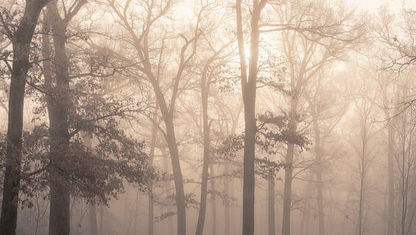Wandering Among the Mist
