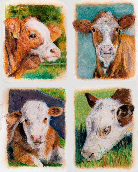 """4 Square Herefords"" Art 