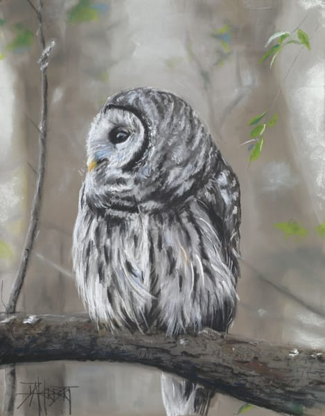 """Barred Owl"" Art 