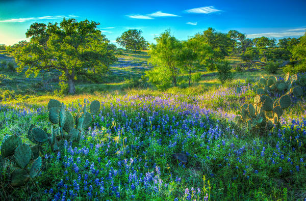 Bluebonnet Hillside Photography Art | Michael Penn Smith - Vision Worker