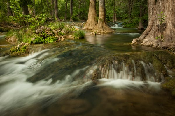 Cypress Creek Waterfall II