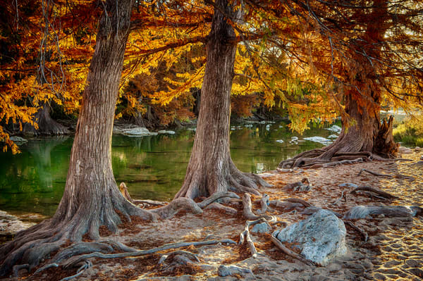 3 Cypresses On Pedernales Photography Art | Michael Penn Smith - Vision Worker