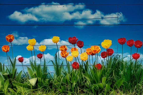 Tiptoe Through The Tulips Photography Art   CJ Harding