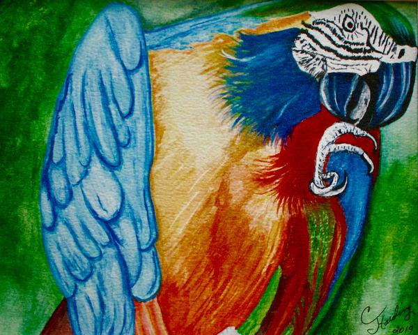Parrot Preening Art | CJ Harding