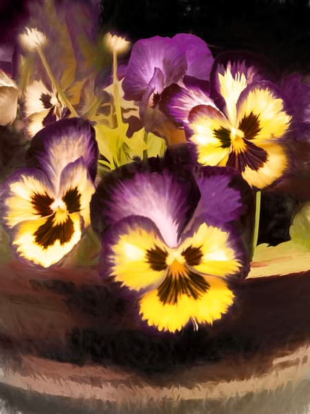 Pansies  Photography Art | Pam Phillips Photography