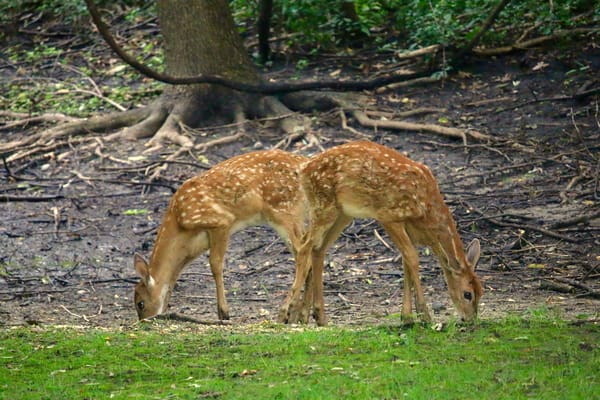 Two Fawns Photography Art | CJ Harding