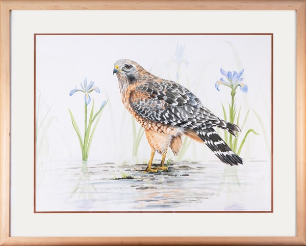 Carl Freeman's Wildlife Art