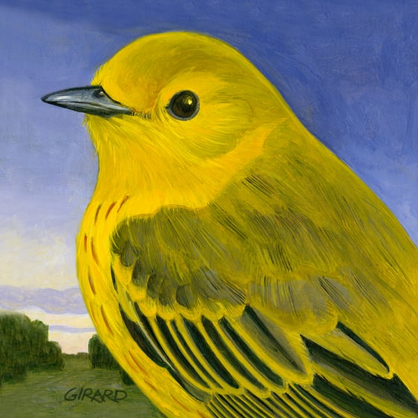 Yellow Warbler Art | Studio Girard