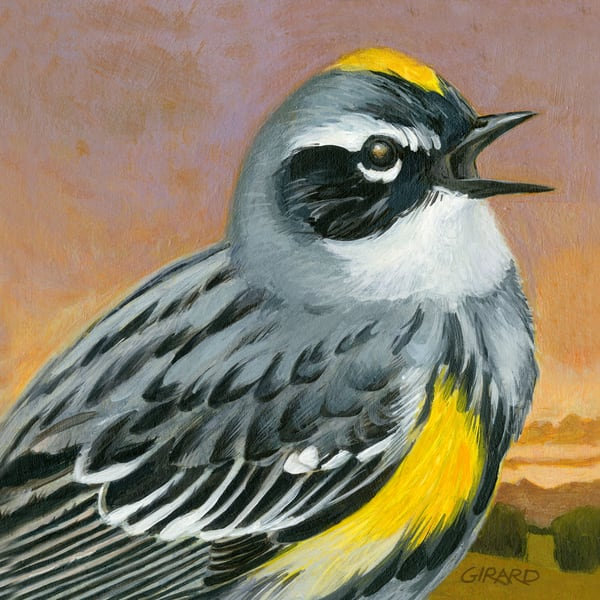 Yellow Rumped Warbler Art | Studio Girard
