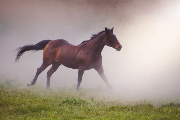 Fine Art Horse Photography | Chapters