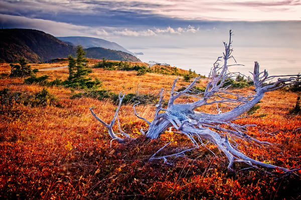Windy Highlands Photography Art | Scott Kemper Imagery