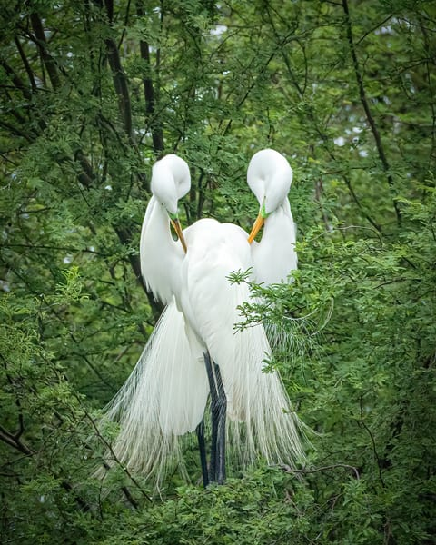 Preening Pair Photography Art | John Martell Photography