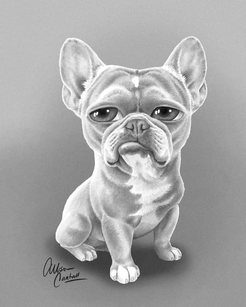 Amari The Frenchie Art | BunnyPigs