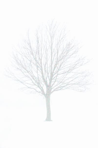 A stark shot of a leafless tree in winter