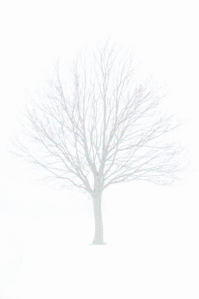 tree photographs fine art photographs for sale, Michael Toole