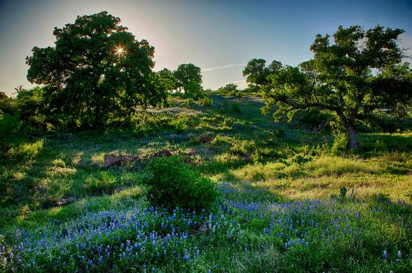 Bluebonnet Hillside Sunset Photography Art | Michael Penn Smith - Vision Worker
