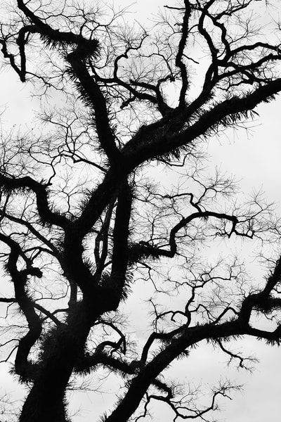 Moss Tree in Japan Photograph - Zen Photography - Fine Art Prints on Canvas, Paper, Metal & More
