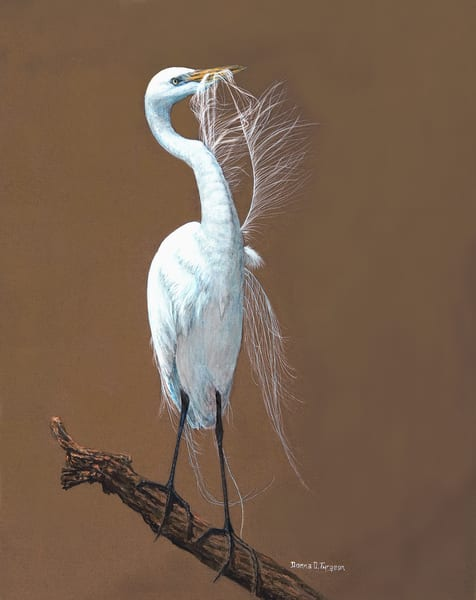 Great Egret Preening I  Art | artalacarte