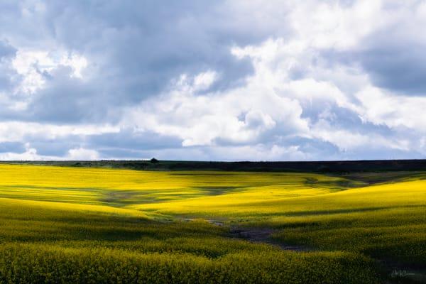 Prairie Bloom