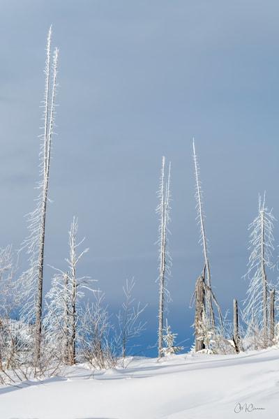 Sweet Winter Light