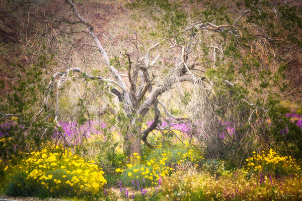 Super Bloom Monet I