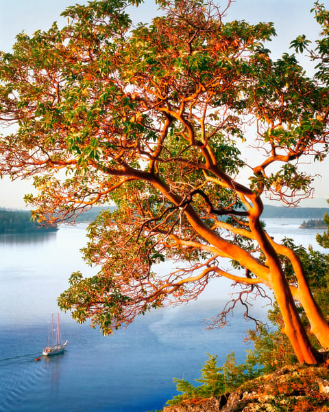 A journey through the San Juan Islands. Sailboats and madrona trees are plentiful.
