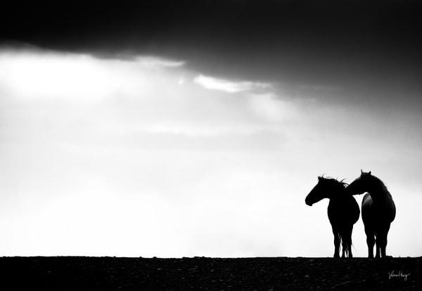 Shadows Of Light  Photography Art   Koru Photo Designs