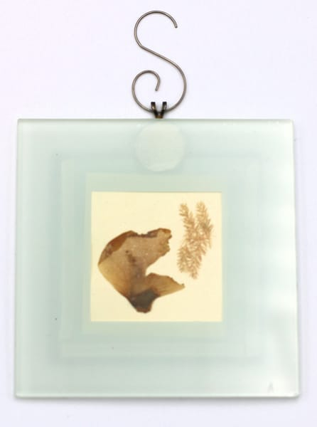 Pressed Flower Ornament Wall Hanging (AA009)