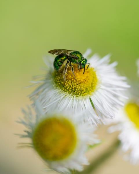 Green on White - Art Print - Tamea Photography