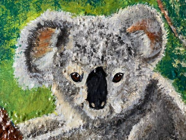Koala S Face Art | Rowena Art Shop