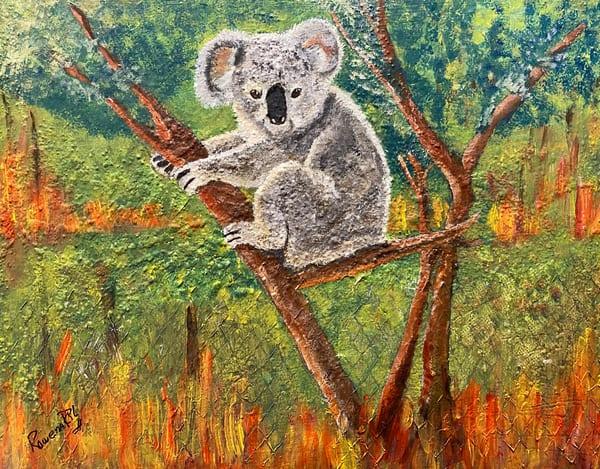 Endangered: Australian Koala