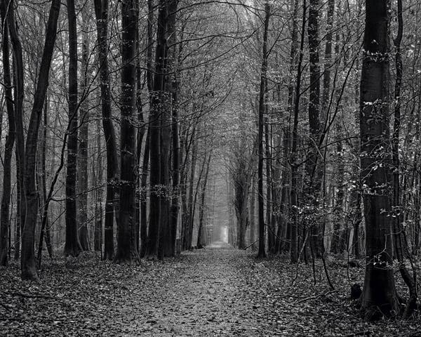 Late Autumn Walk Through the Sonian Forest No. 18, Belgium, 2019