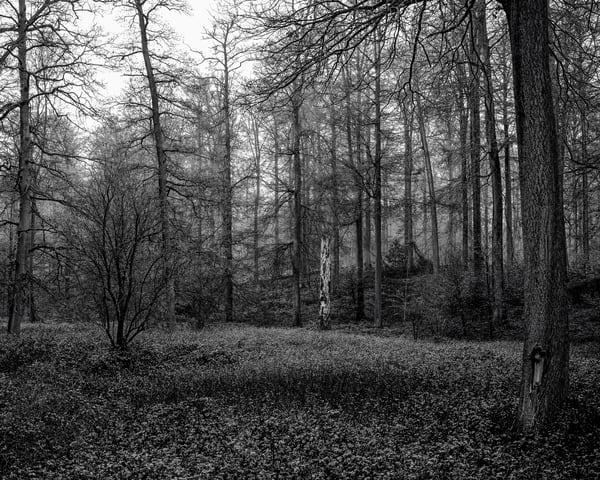Late Autumn Walk Through the Sonian Forest No. 22, Belgium, 2019