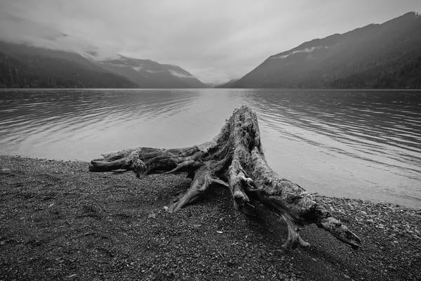 Stump, Lake Crescent, Washington, 2016