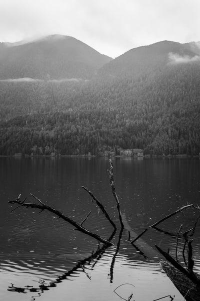 Sunken Tree, Lake Crescent, Washington, 2016
