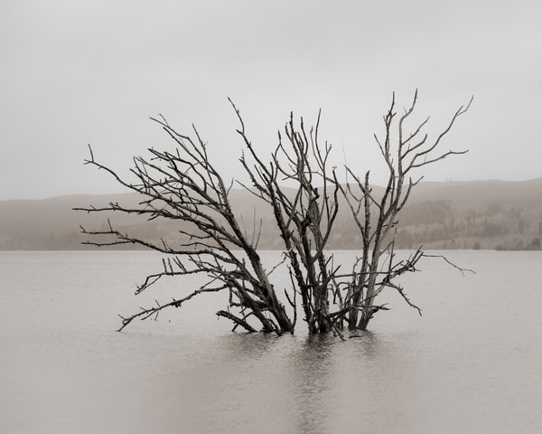 Submerged Tree on the Willapa, Pacific County, Washington, 2018