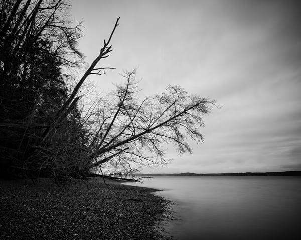 Trees Over the Beach, Kopachuck State Park, Washington, 2020