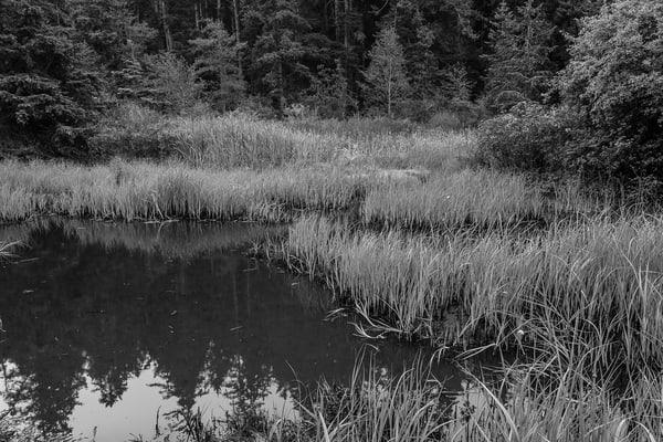 Wetlands at Bowman Bay, Deception Pass State Park, Washington, 2016