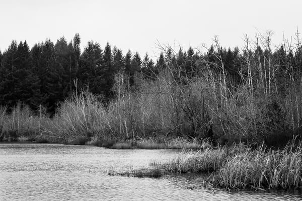 Winter at Deep Lake, Washington, 2016