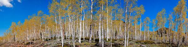 Pando Photography Art | Art in Nature